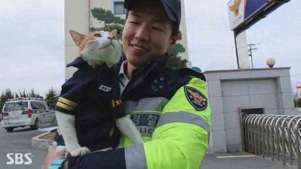Cô mèo đáng thương mất đi những đứa con và hành động tuyệt vời của lực lượng cảnh sát Busan, Hàn Quốc - Ảnh 1.