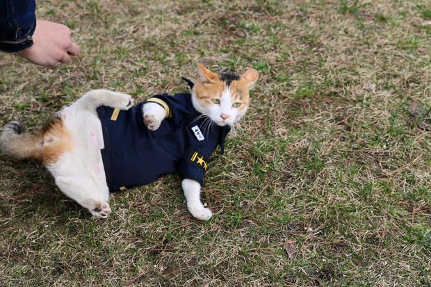 Cô mèo đáng thương mất đi những đứa con và hành động tuyệt vời của lực lượng cảnh sát Busan, Hàn Quốc - Ảnh 11.