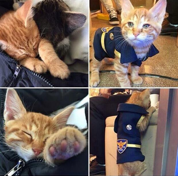 Cô mèo đáng thương mất đi những đứa con và hành động tuyệt vời của lực lượng cảnh sát Busan, Hàn Quốc - Ảnh 10.