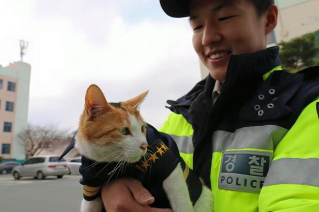 Cô mèo đáng thương mất đi những đứa con và hành động tuyệt vời của lực lượng cảnh sát Busan, Hàn Quốc - Ảnh 9.