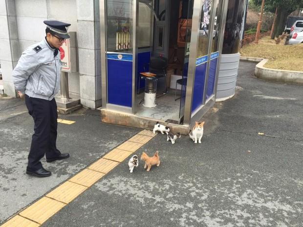 Cô mèo đáng thương mất đi những đứa con và hành động tuyệt vời của lực lượng cảnh sát Busan, Hàn Quốc - Ảnh 7.