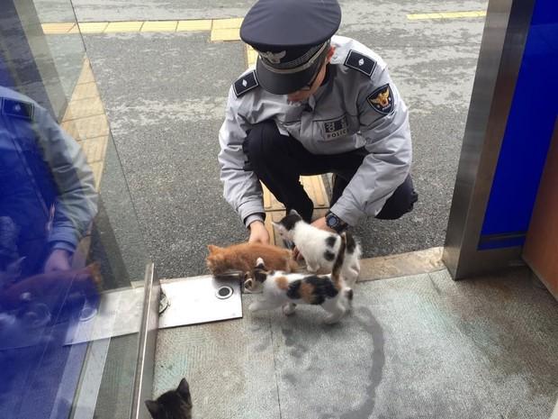 Cô mèo đáng thương mất đi những đứa con và hành động tuyệt vời của lực lượng cảnh sát Busan, Hàn Quốc - Ảnh 8.
