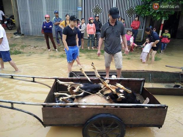 Chùm ảnh: Những hình ảnh nhói lòng về mưa lũ kinh hoàng ở miền Trung - Ảnh 11.