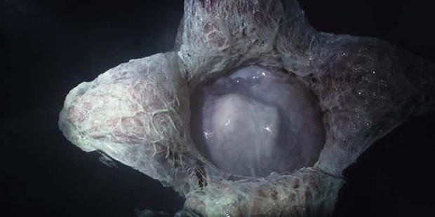 14 hiện thân ghê rợn của Alien đã xuất hiện trong thương hiệu phim suốt 4 thập kỷ - Ảnh 2.