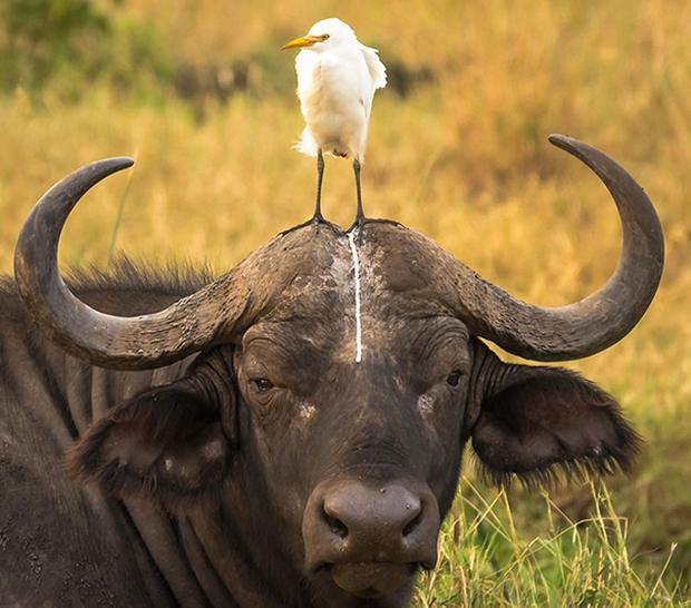 17 khoảnh khắc chết cười của những con vật bị quạt trần rơi vào đầu - Ảnh 15.