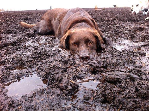 16 chú chó không dùng bột giặt nhưng cũng chẳng ngại gì vết bẩn - Ảnh 11.