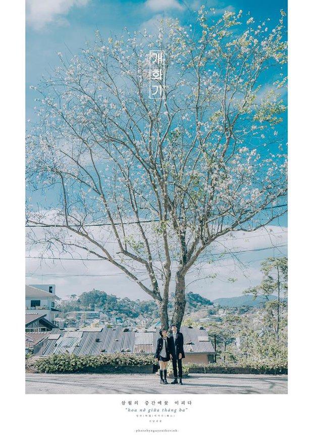 Không phải Nhật Bản đâu, bạn đang xem ảnh hoa ban trắng tuyệt đẹp ở Đà Lạt đấy! - Ảnh 15.