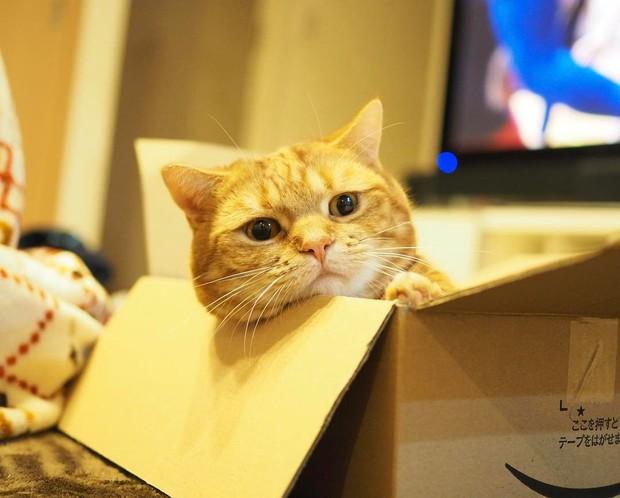Cả thế giới ra mà xem cặp mèo chân ngắn một mẩu đốn tim cư dân mạng - Ảnh 3.