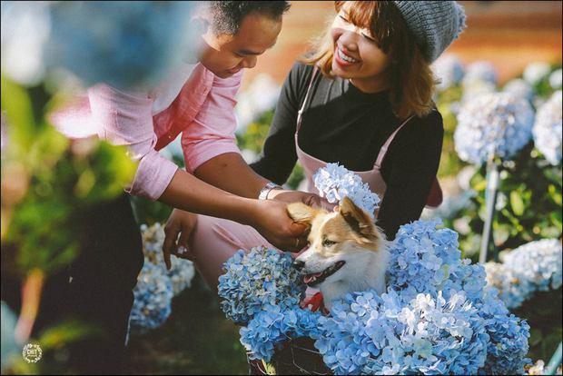 Cánh đồng hoa cẩm tú cầu đẹp mê hồn sẽ là điểm đến hot nhất ở Đà Lạt những ngày tới! - Ảnh 9.