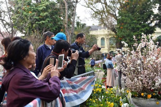 Người dân Hà Nội háo hức chụp ảnh với hoa anh đào từ ngoài hàng rào - Ảnh 3.
