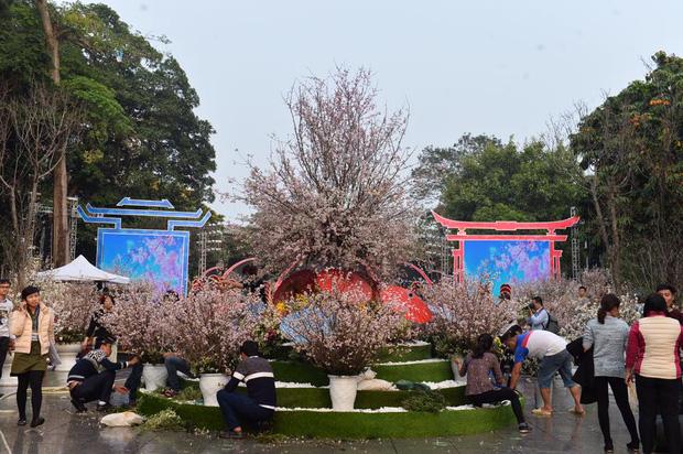 Người dân Hà Nội háo hức chụp ảnh với hoa anh đào từ ngoài hàng rào - Ảnh 2.