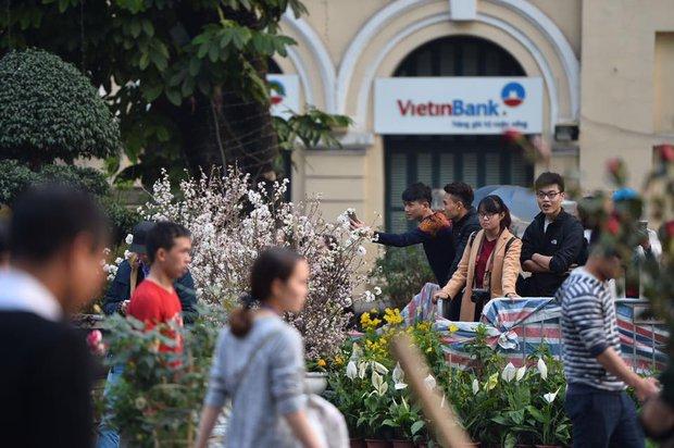 Người dân Hà Nội háo hức chụp ảnh với hoa anh đào từ ngoài hàng rào - Ảnh 5.