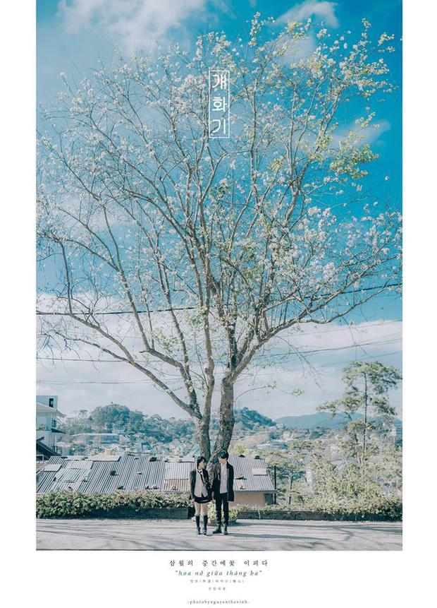 Không phải Nhật Bản đâu, bạn đang xem ảnh hoa ban trắng tuyệt đẹp ở Đà Lạt đấy! - Ảnh 5.