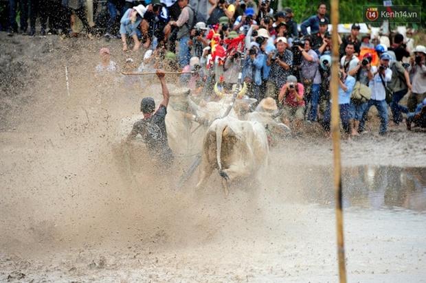 Chùm ảnh: Những pha té ngã không thương tiếc trên đường đua bò vùng Bảy Núi - Ảnh 11.