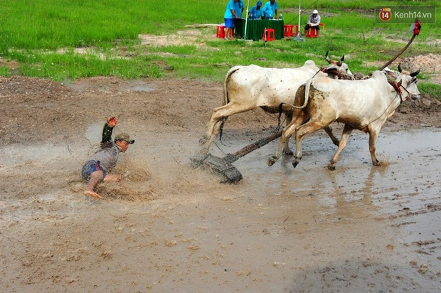 Chùm ảnh: Những pha té ngã không thương tiếc trên đường đua bò vùng Bảy Núi - Ảnh 6.