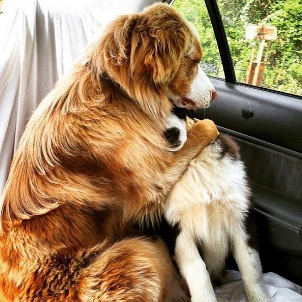 21 chú chó dù to xác nhưng lại có tâm hồn mong manh dễ vỡ - Ảnh 3.