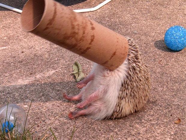 17 khoảnh khắc chết cười của những con vật bị quạt trần rơi vào đầu - Ảnh 25.