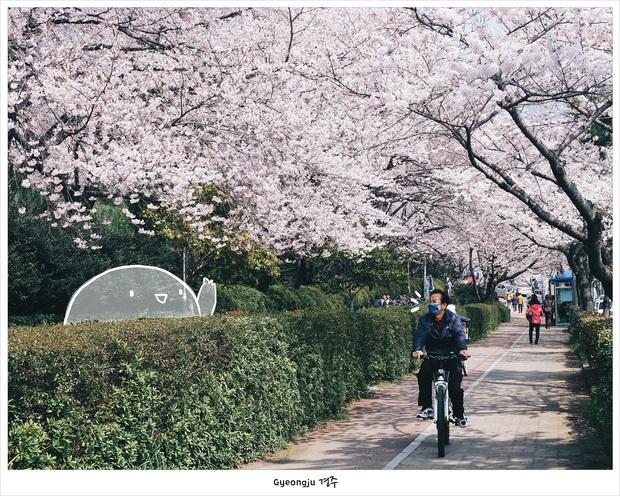 Hàn Quốc: Nếu không biết đánh son, không shopping thì mình đi đâu nơi kinh đô nhan sắc này? - Ảnh 17.