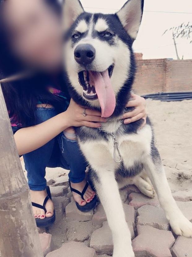 Cô gái cho bạn thân mượn chó cưng Husky để vượt qua stress, bạn bán chó lấy 2 triệu tiêu xài - Ảnh 3.