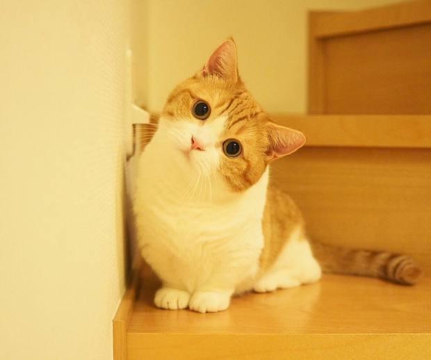 Cả thế giới ra mà xem cặp mèo chân ngắn một mẩu đốn tim cư dân mạng - Ảnh 4.