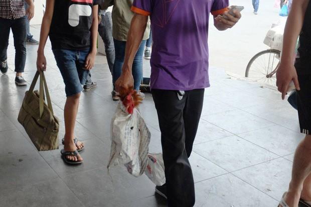 Một số người dân mang theo gia cầm từ quê trở về Thủ đô. Ảnh: Định Nguyễn