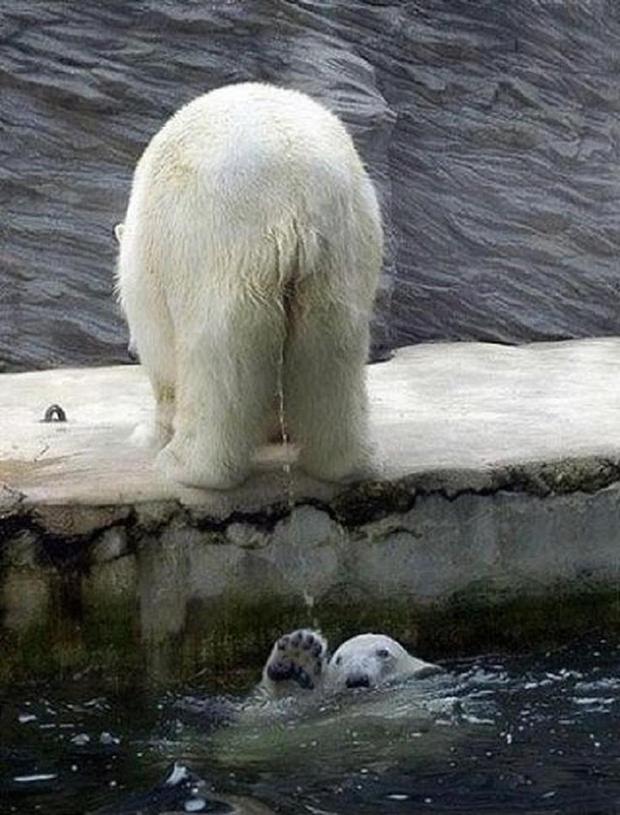 17 khoảnh khắc chết cười của những con vật bị quạt trần rơi vào đầu - Ảnh 29.