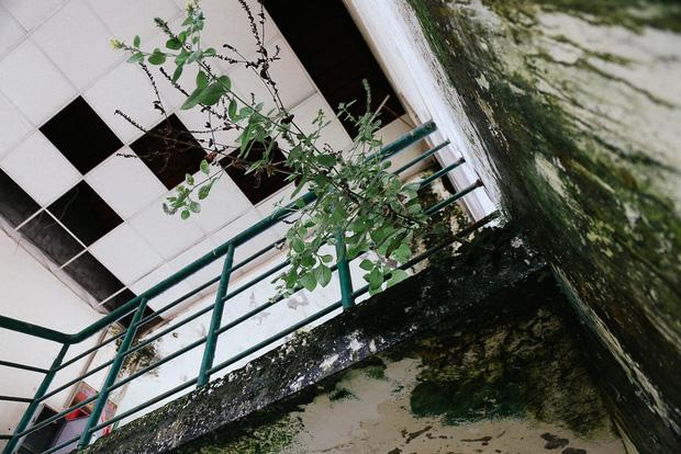 Cảnh u ám bên trong ngôi trường tiểu học 20 tỷ đồng bị bỏ hoang gần 10 năm giữa Sài Gòn - Ảnh 4.