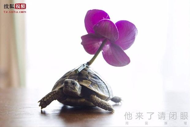 7 thú cưng đáng yêu lạc lối mà ai cũng đổ trên màn ảnh Hoa Ngữ - Ảnh 29.