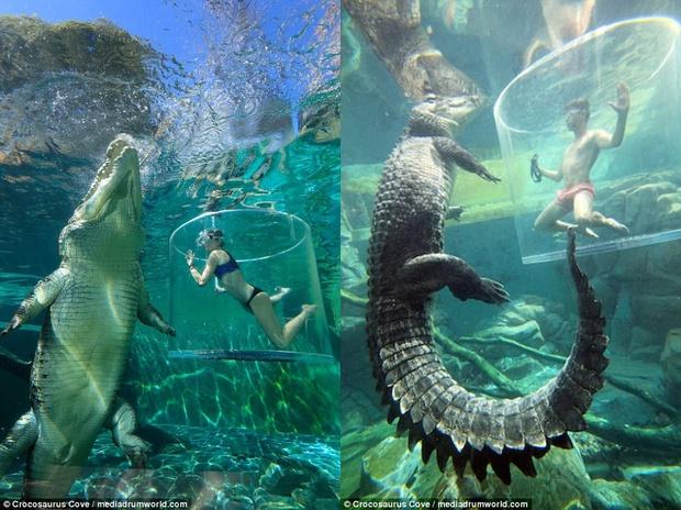 Nhiều du khách chi tiền triệu để trải nghiệm cảm giác mạnh, đối mặt với cá sấu ăn thịt người dài 5m - Ảnh 2.