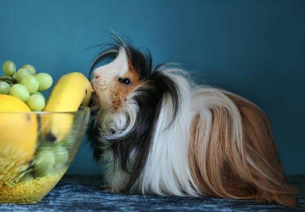 Ngắm 10 bé chuột lang sở hữu mái tóc mượt mà như quảng cáo dầu gội - Ảnh 19.