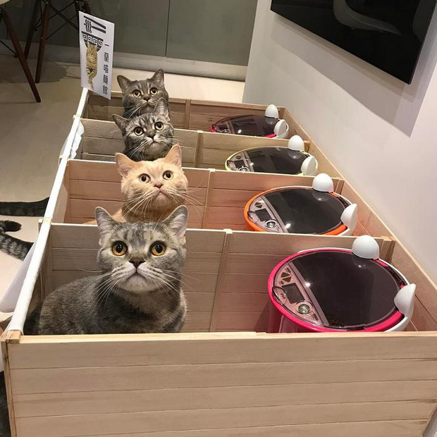 Mèo béo ăn tranh phần của con, chủ nhân đã nghĩ ra cách vô cùng vi diệu - Ảnh 2.