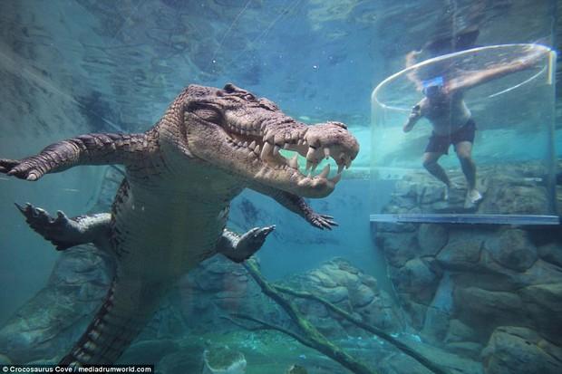Nhiều du khách chi tiền triệu để trải nghiệm cảm giác mạnh, đối mặt với cá sấu ăn thịt người dài 5m - Ảnh 3.