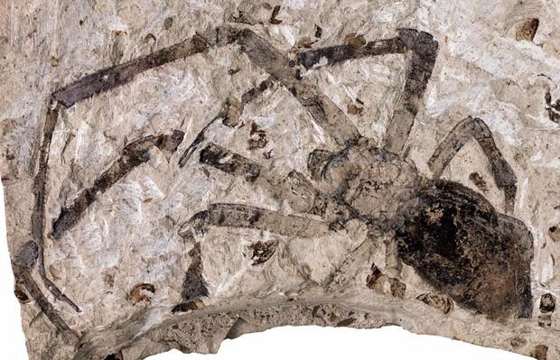 Truy tìm tông tích những quái nhện khổng lồ ăn thịt người thời cổ đại - Ảnh 4.
