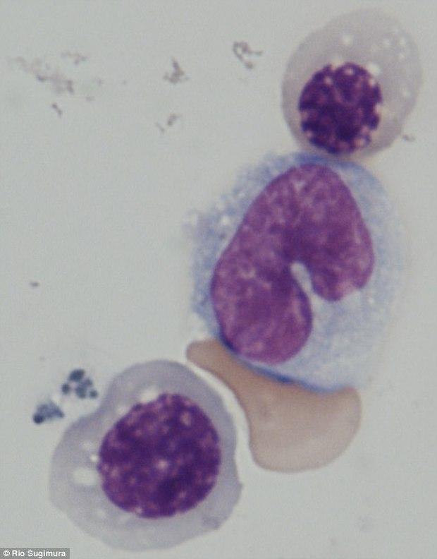 Phát triển thành công máu từ da người, mở ra kỷ nguyên mới cho y học - Ảnh 2.