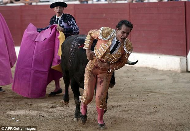 Đấu sĩ Tây Ban Nha thiệt mạng vì bị bò tót đâm thủng phổi - Ảnh 2.