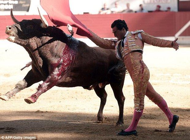Đấu sĩ Tây Ban Nha thiệt mạng vì bị bò tót đâm thủng phổi - Ảnh 1.