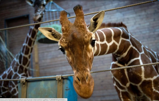 Chùm ảnh: Vì sự vô tâm của con người mà nhiều loài động vật phải chịu kết cục thảm thương đến nhường này - Ảnh 7.