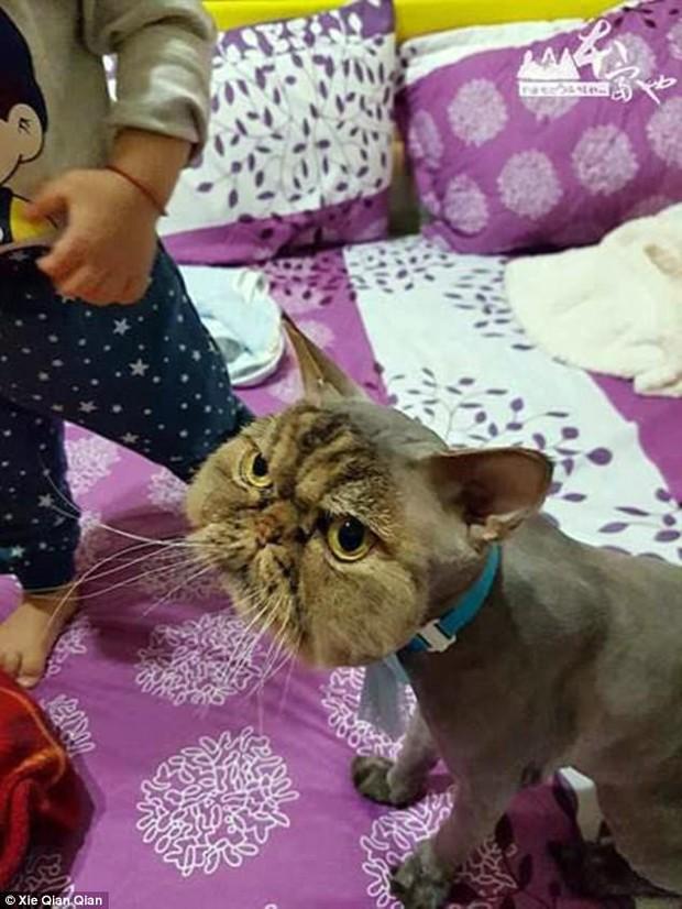 Không thể nhịn cười khi nhìn chú mèo đang cạo lông dở thì nhà mất điện - Ảnh 3.