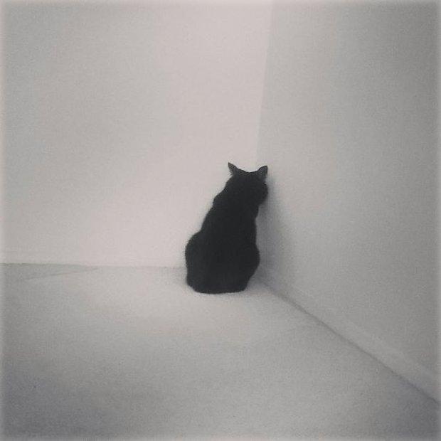 17 biểu cảm chứng tỏ mèo là bọn diễn sâu nhất quả đất - Ảnh 1.