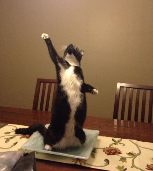 17 biểu cảm chứng tỏ mèo là bọn diễn sâu nhất quả đất - Ảnh 5.