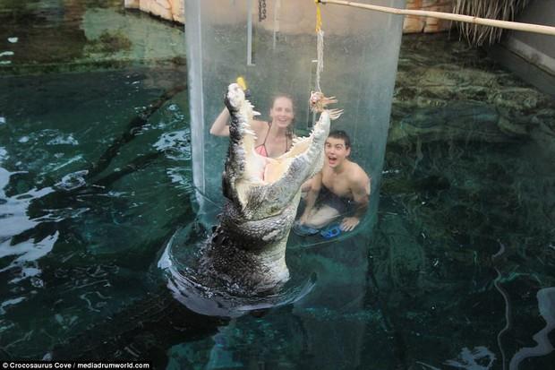 Nhiều du khách chi tiền triệu để trải nghiệm cảm giác mạnh, đối mặt với cá sấu ăn thịt người dài 5m - Ảnh 6.