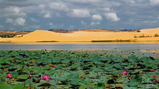 Ngẩn ngơ trước 5 đồi cát đẹp mê hồn ở miền Trung, nhìn thôi đã yêu luôn rồi - Ảnh 18.
