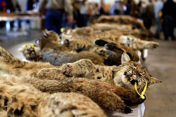 Sự thật tàn ác trần trụi trong các lò nuôi của ngành công nghiệp lông thú - Ảnh 7.