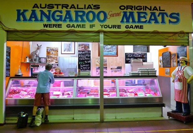 Úc: Chuột túi nhiều gấp đôi người, chính quyền huy động người dân ăn thịt Kangaroo - Ảnh 4.