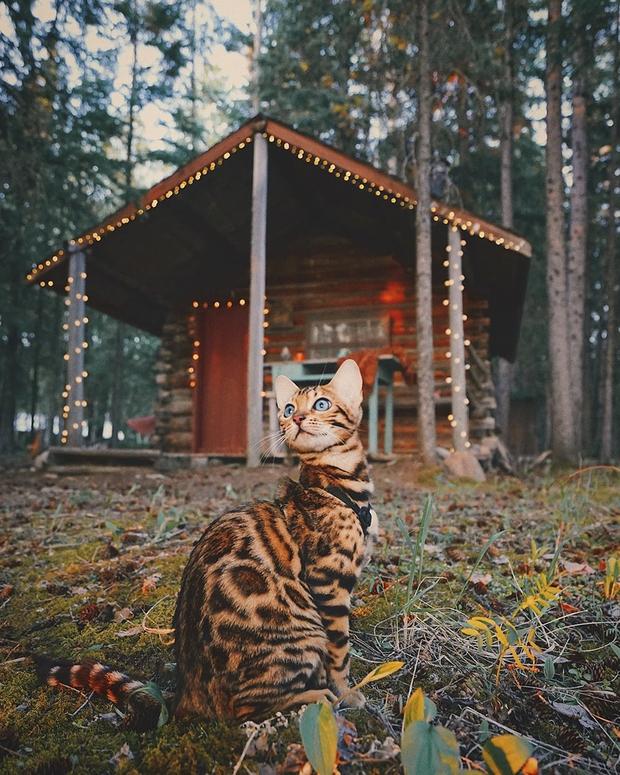 Gặp gỡ chú mèo xinh đẹp cùng cô chủ đi du lịch khắp thế gian - Ảnh 13.
