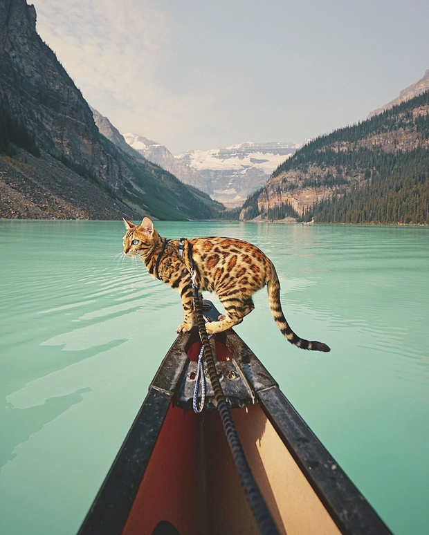 Gặp gỡ chú mèo xinh đẹp cùng cô chủ đi du lịch khắp thế gian - Ảnh 9.