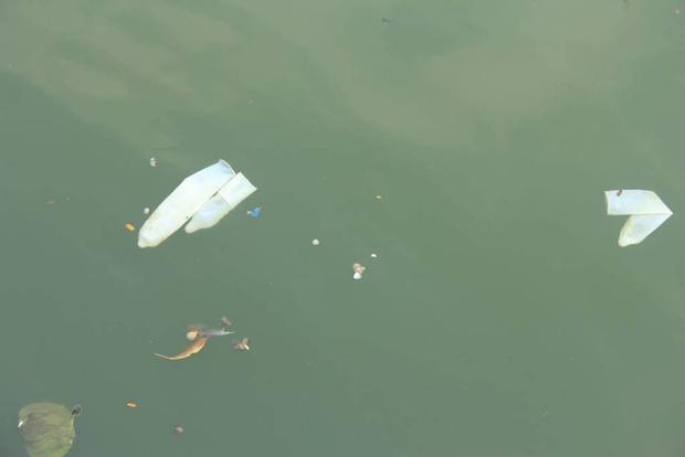 Hà Nội: Bao cao su nổi trắng một góc hồ Tây, người dân trèo thuyền ra vớt - Ảnh 7.