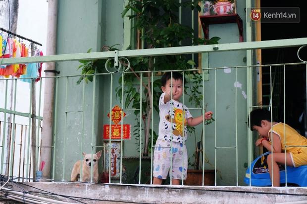 Tranh cãi vấn đề cấm nuôi chó, mèo trong chung cư ở Sài Gòn: Vẫn chưa đến hồi kết! - Ảnh 1.