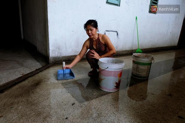 Tranh cãi vấn đề cấm nuôi chó, mèo trong chung cư ở Sài Gòn: Vẫn chưa đến hồi kết! - Ảnh 5.