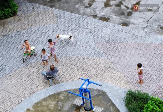 Tranh cãi vấn đề cấm nuôi chó, mèo trong chung cư ở Sài Gòn: Vẫn chưa đến hồi kết! - Ảnh 7.